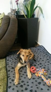 katzehund2